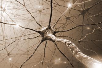 NeurOptimal Neurofeedback Nederland
